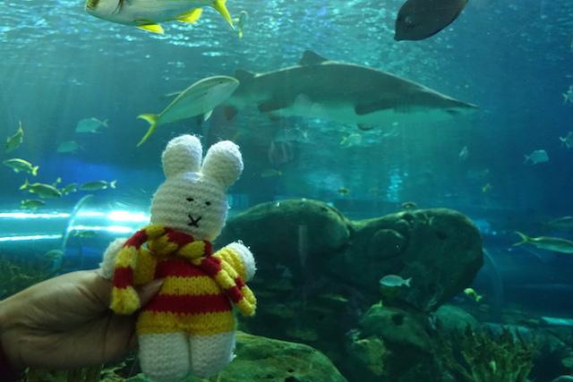 Ko Nientje in Ripleys Aquarium in Toronto (Canada)