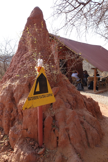 Ko Nientje op de Waterberg (Namibië)