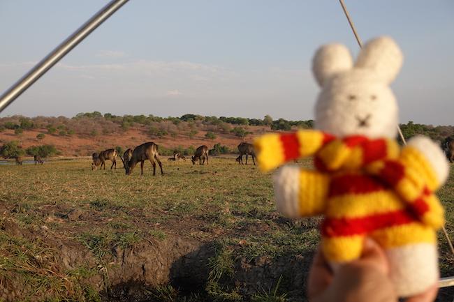 Ko Nientje bij de Chobe rivier, Botswana