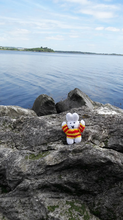 Ko Nientje op een rots ten zuiden van Cork, Ierland
