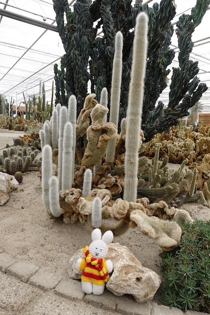 Ko Nientje in Cactus Oase in Ruurlo