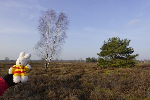 Ko Nientje op de Ermelosche Heide
